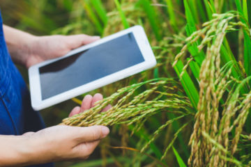 farmer inspecting crops with a tablet